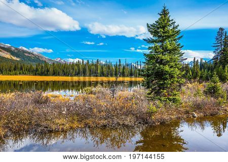 Waterlogged valley in the Rocky Mountains of Canada. Autumn yellow grass on shore. The concept of active tourism and eco-tourism