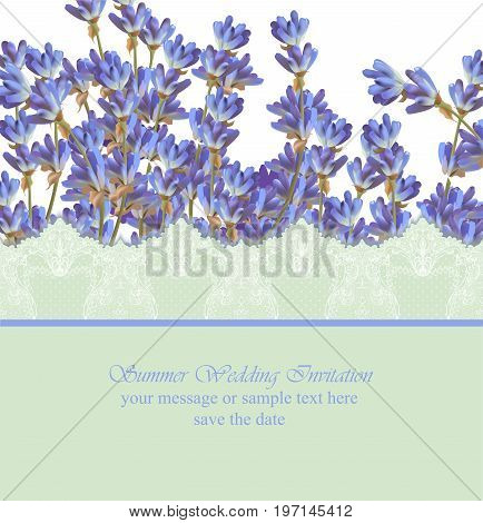 Lavender card province style. Vector detailed realistic flower