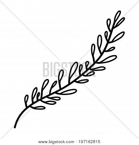 sketch contour of hand drawing leaf with several ramifications vector illustration