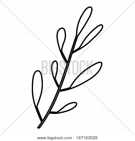 sketch contour of hand drawing closeup leaf oval shape with several ramifications vector illustration