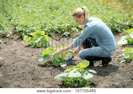 The Young girl agronomist planting new plant