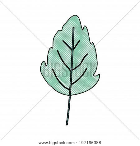 crayon silhouette of green light color of small lobed leaf plant vector illustration