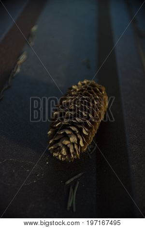 In the early summer morning laid on a brown metal spruce cone and a few dried spruce needles.