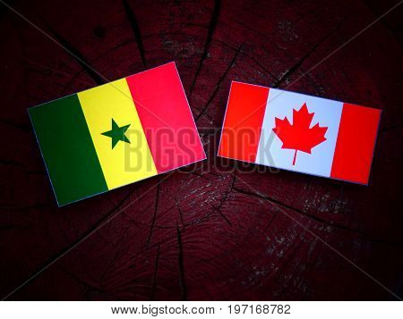 Senegal Flag With Canadian Flag On A Tree Stump Isolated