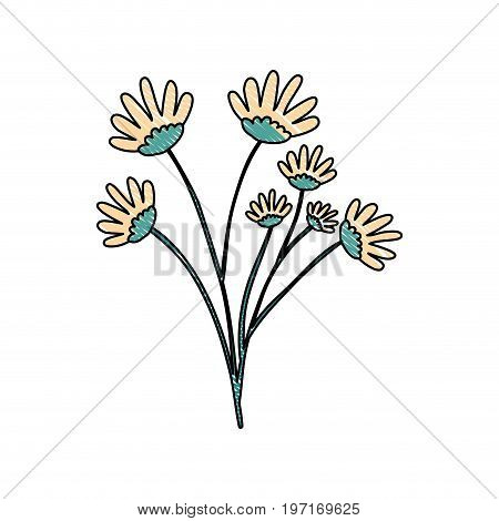crayon silhouette of hand drawing yellow color daisy flower bouquet with several ramifications vector illustration