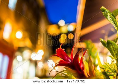 Macro Closeup Of Red Bromelia Flower At Night With Bokeh Background On Illuminated European Street