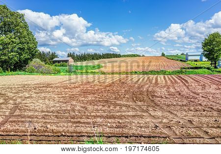Ile D'orleans Landscape With Brown Raked Field Furrows In Summer For Potatoes And Farm House