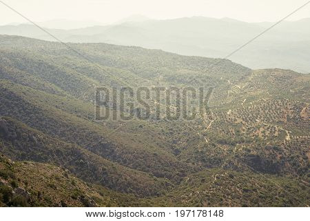 mountain overgrown by olive trees, view from top
