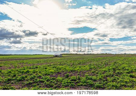 Landscape View Of Farm In Ile D'orleans, Quebec, Canada With Vintage Shed