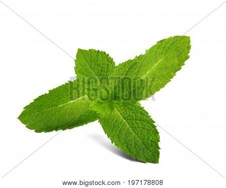 Refreshing green mint twig close-up. Fresh colorful leaves isolated on a white background. Perfect ingredient for summer cocktails and beverages. Organic fragrant spice.