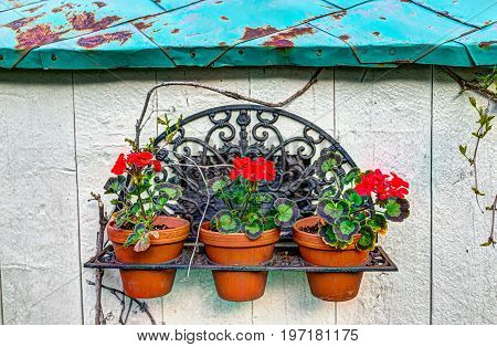 Colorful French Wall Painted In White And Green With Gerainum Pelargonium Flowers