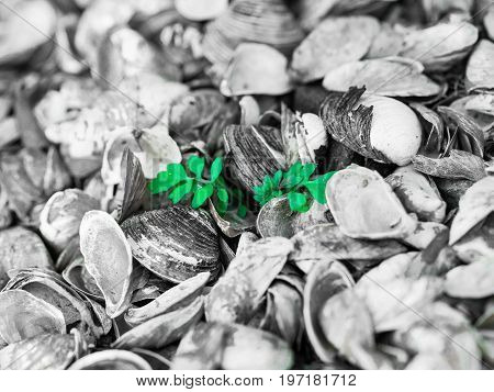 A small green plant growing out of a sea of shells.