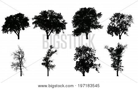 Set of vector realistic silhouettes of deciduous trees isolated on white background