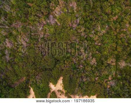 Aerial view looking straight down at green coastal vegetation tree tops
