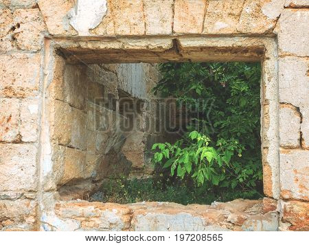 Window With Green Trees Inside The House. The Ruins Of Ancient Buildings. Inside Destroyed Buildings