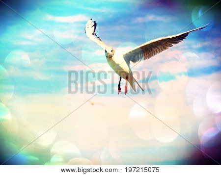 Film Effect.sea Gull In Blue Sky. Wild Seagull Bird Flies And Looking Into Camera. Blue Sky Over The