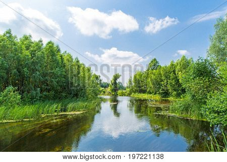 Summer landscape with river in forest
