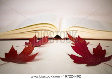 A symbol of returning to school - an open book red maple leaves. Blurred image. Concept of education knowledge and self-development