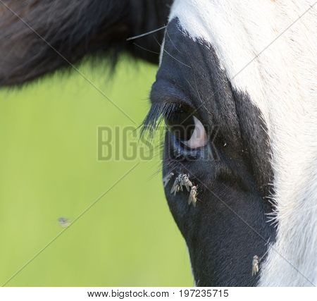 flies in front of a cow . A photo