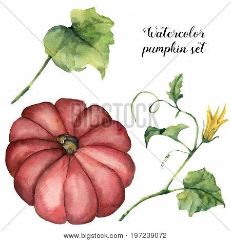 Watercolor set with pumpkin, leaves and flowers. Hand painted pumpkin with branch isolated on white background. Botanical illustration for design. Halloween print