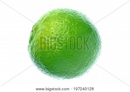 Isolate green lime on white background, a select focus close up photo image of green lime isolate on bright white light back ground present a detail of pattern and texture on green lime skin