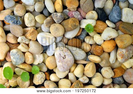 Round stone/grave, a close up photo of colorful round stone/gravel that use to decorate on the ground in the garden present a detail of stone/gravel on that area can use for a background or wallpaper