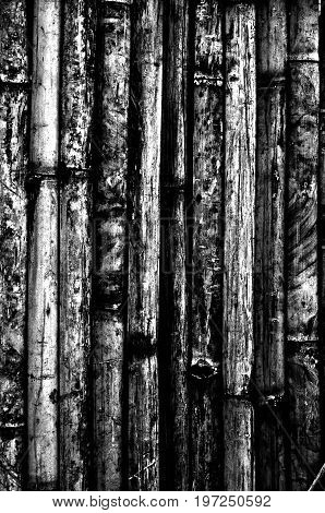Bamboo wood fence, a black and white close up image of a bamboo wood fence present a detail of texture and pattern of bamboo wood in that area can use for a background or wallpaper