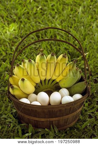 Banana an duck eggs in a wood basket, a close up photo image of yellow hand of bananas and white duck eggs arranged in brown wood basket with handle