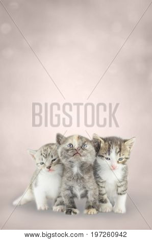 Three Little Kittens Together On Bokeh Background