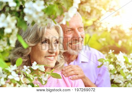 Happy senior couple standing in blooming cherry tree