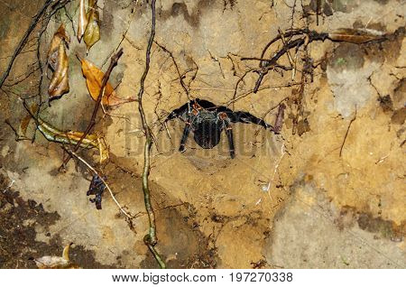 Night view of tarantula back at the edge of hole, night view