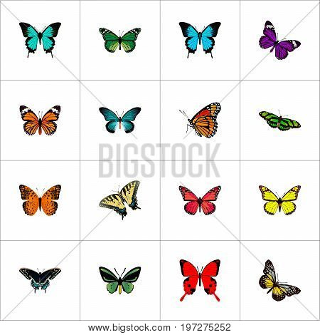 Realistic Monarch, Butterfly, Tropical Moth And Other Vector Elements