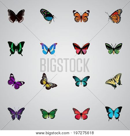 Realistic Birdwing, Tropical Moth, Butterfly And Other Vector Elements