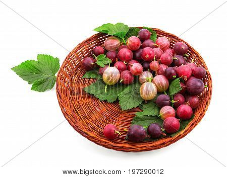 Ripe multicolored gooseberries with green leaves, isolated on a white background. Juicy gooseberries different shades in a basket. Nutritious vitamins.
