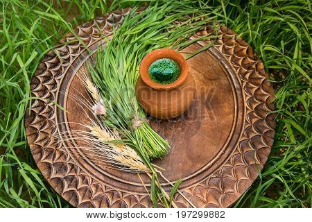 Wheatgrass juice in a clay pot on a brown wooden table with fresh wheat herbs and wheat spikelet against the background of a green wheat grass