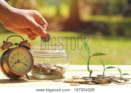 hand put money at jary with alarm clock and small tree growth up on staked of coins on wood background concept in growth save and investment in business