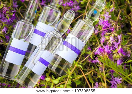 Alternative Medicine.thyme And Medical Ampoules. Essential Oils