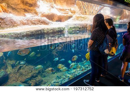 OSAKA, JAPAN - JULY 18, 2017: Unidentified people looking the ecuadorian species of fish originative from the Ecuadorian Rainforest in south america, at Aquarium of Osaka.