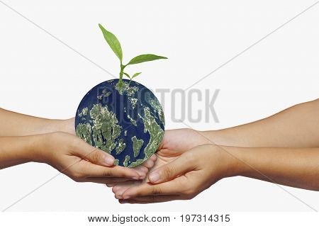 hand hold earth and small tree concept in save world Energy and environment conservation Elements of this image funeshed by NASA