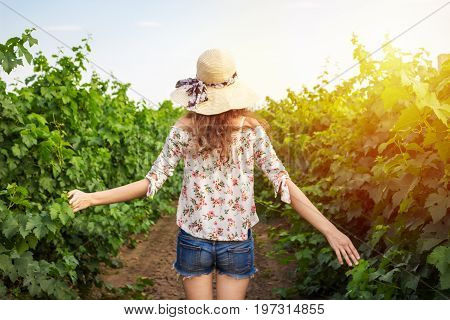 Back view of girl walking through vineyard with arms outstretched. Rear view of woman enjoying in her freedom in nature.