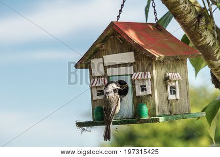 Close-up Of A Blue Titmouse At A Birdhouse