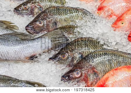 Frozen Nile Tilapia Fish in a Pile of Ice at supermarket Mixed fish for sale on a market Background with fresh fish with ice hake