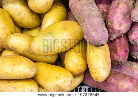 Fresh organic potato stand out among many large background potatos in the market. Heap of potatos root. Close-up potatos texture. Macro potato.
