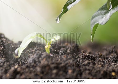 small tree grow up with sunshine and water drop on leaf concept in save world Energy and environment conservation