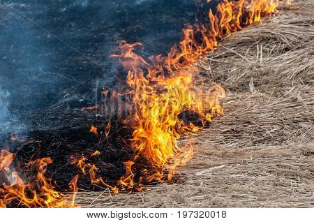 A Closeup Of A Front Line Of A Forest Fire