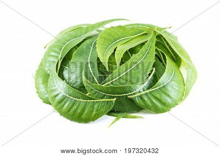 Neem leaves isolated on a white background