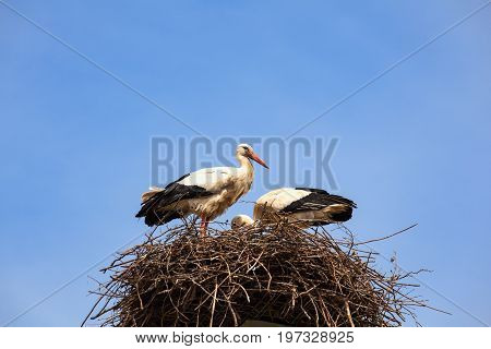 View of two storks are sitting in the nest