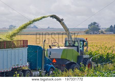 Farmer chopping corn stalks while blowing the resulting silage into a following truck.