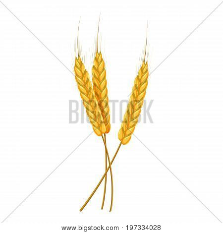 Three ears of wheat icon. Cartoon illustration of wheat ears vector icon for web design