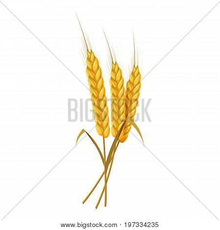Three wheat ears bunch icon. Cartoon illustration of wheat ears vector icon for web design